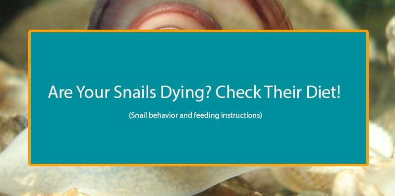 What does a freshwater snail eat