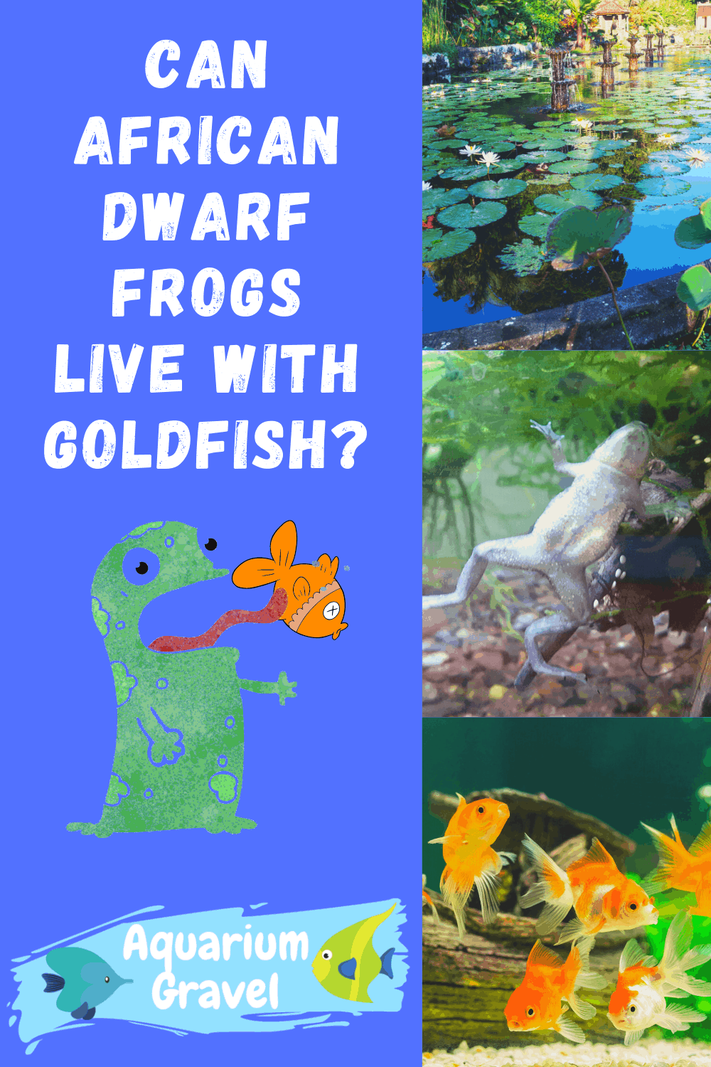 Can African Dwarf Frogs Live With Goldfish
