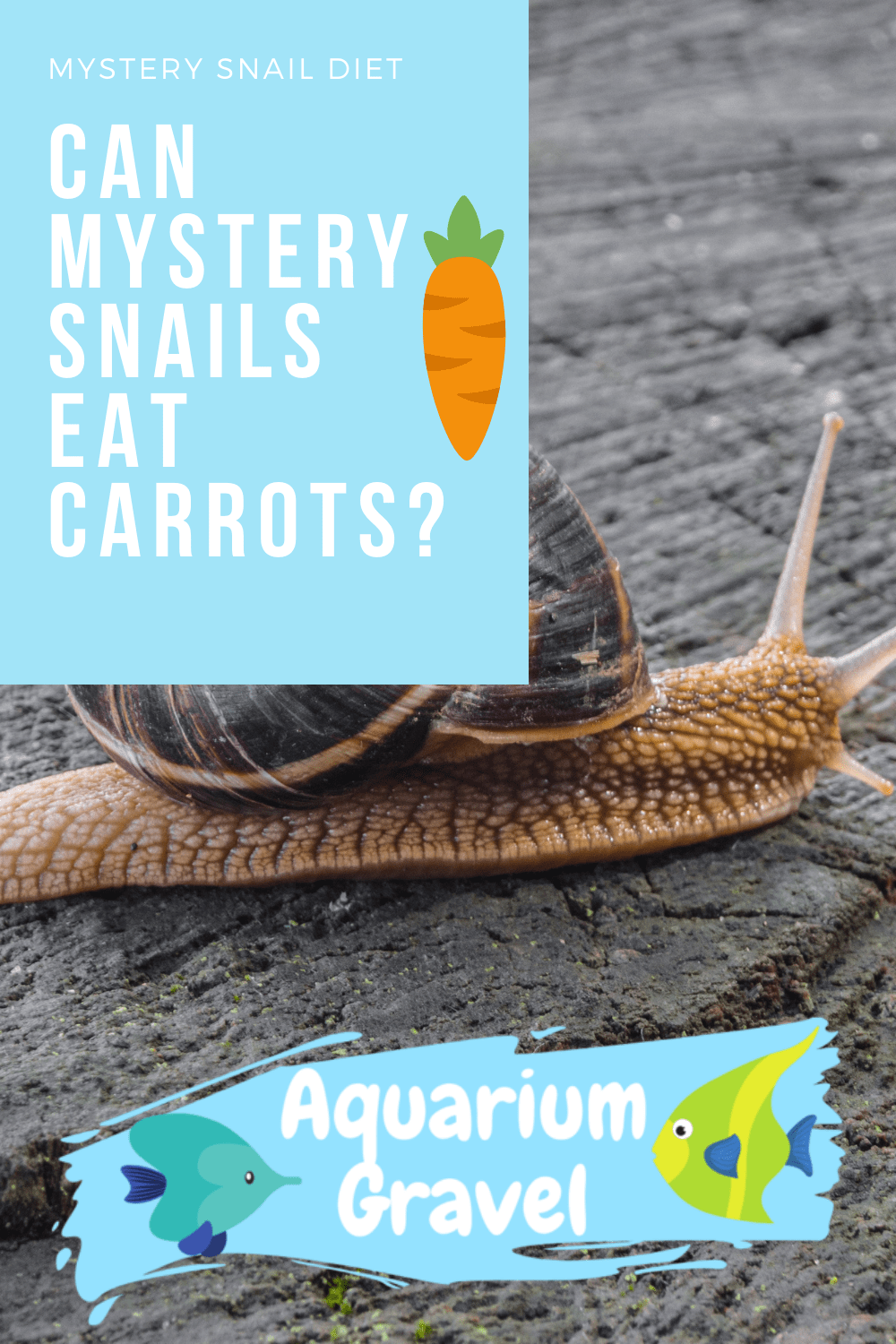 Can Mystery Snails Eat Carrots