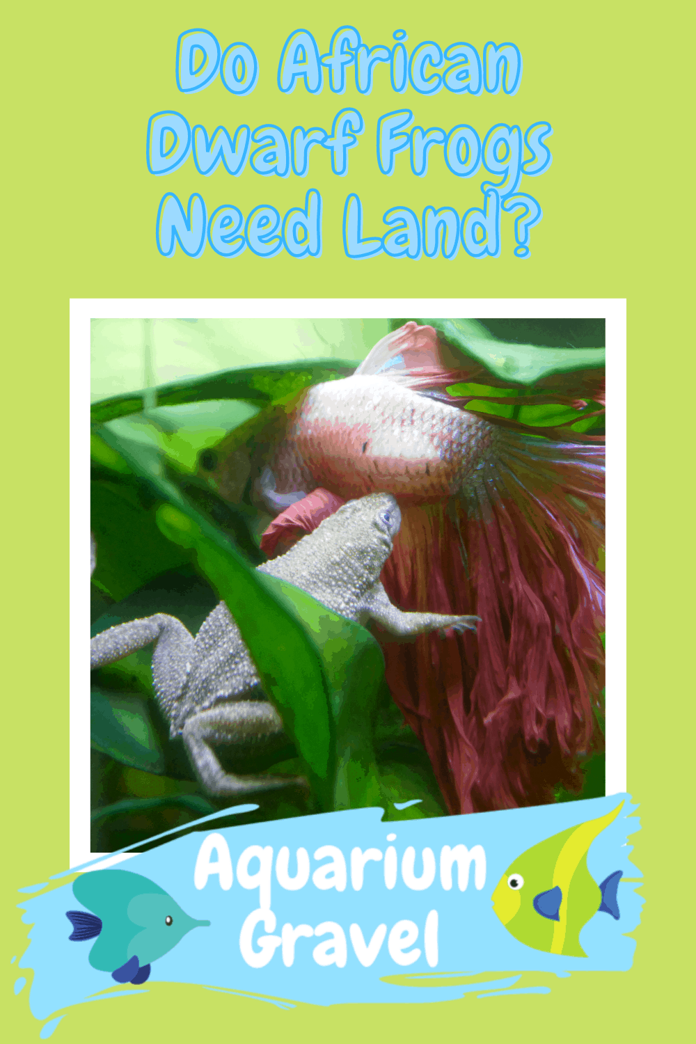 Do African Dwarf Frogs Need Land