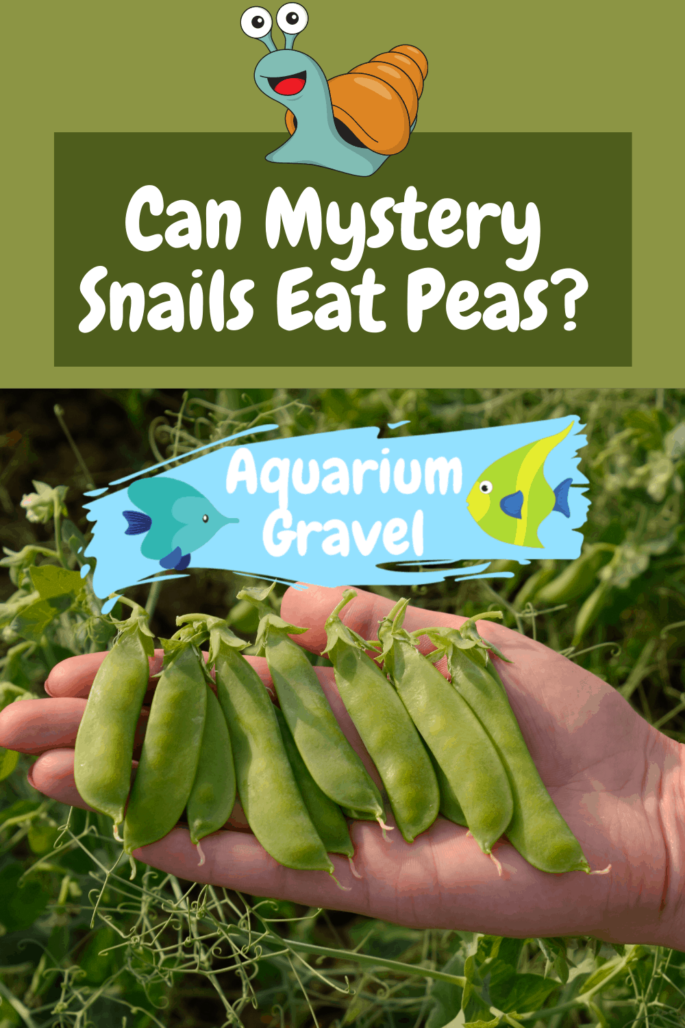 Can Mystery Snails Eat Peas