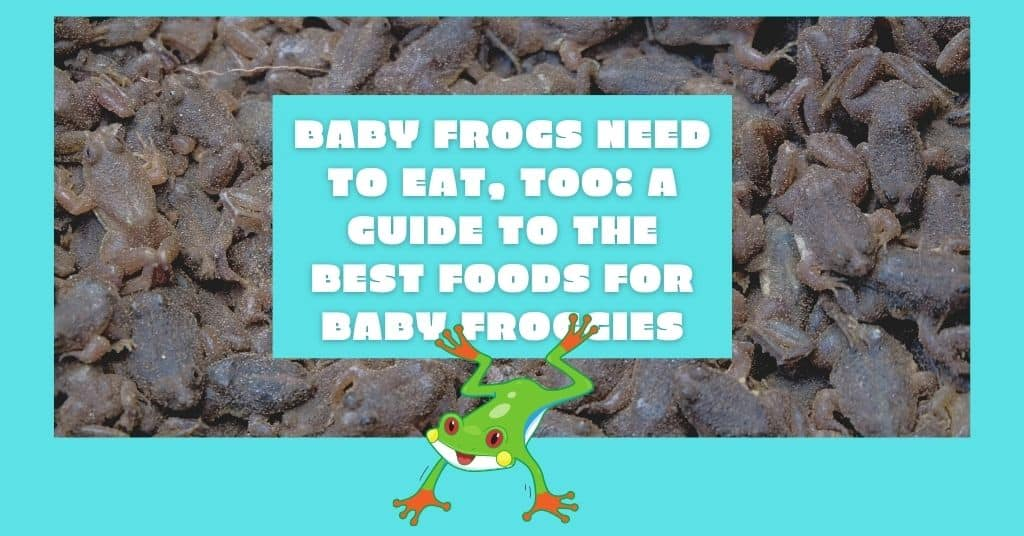 What do baby frogs eat?
