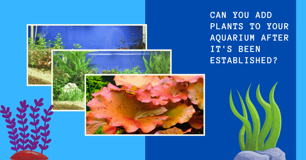 Can You Add Plants to Your Aquarium After it's Been Established?