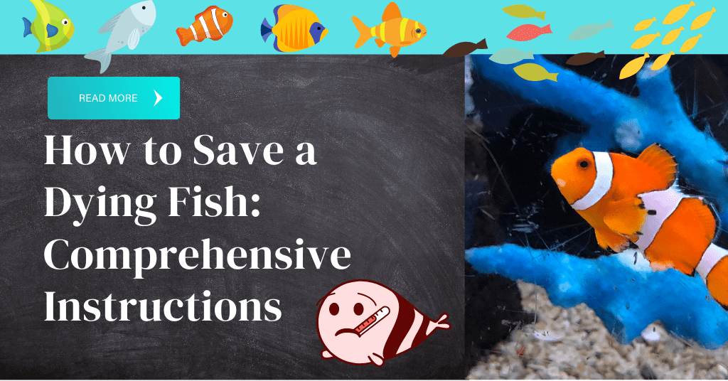 how to save a dying fish