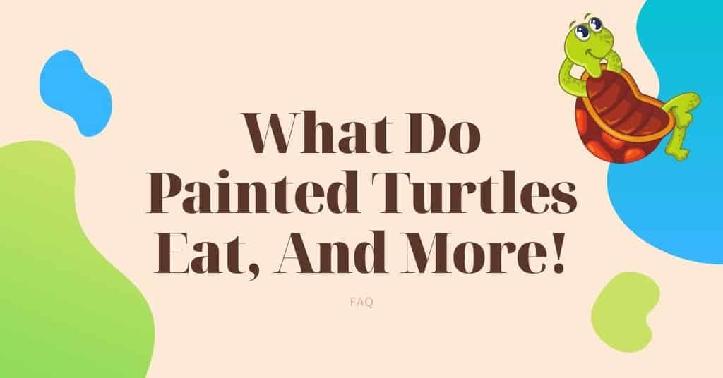 What Do Painted Turtles Eat, And More