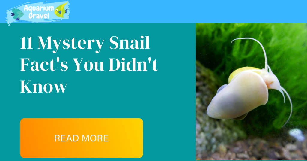 11 Mystery Snail Fact's You Didn't Know