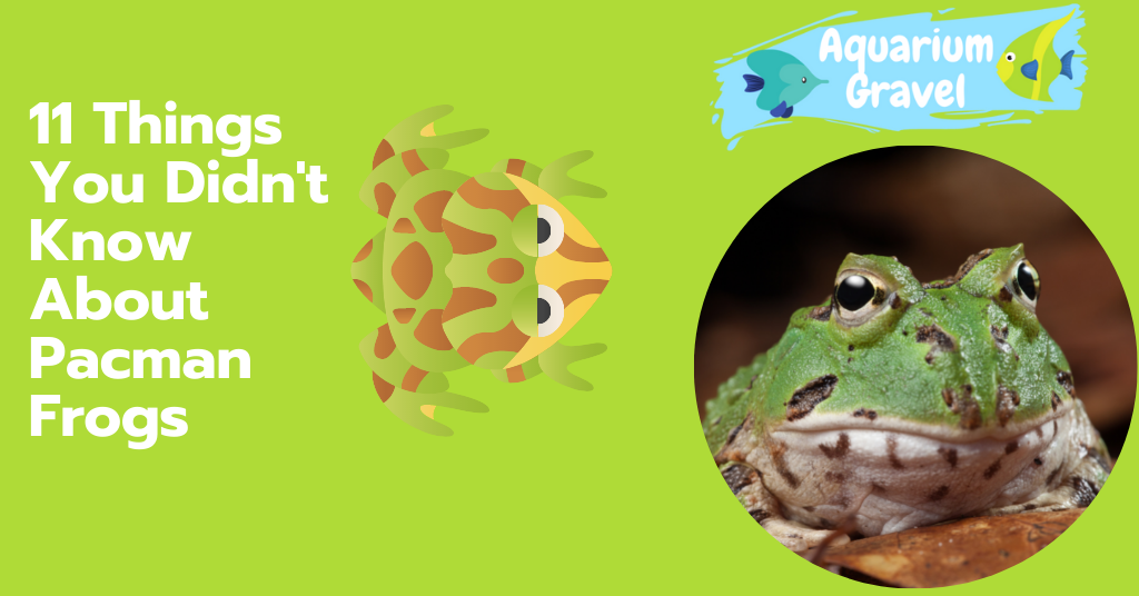 11 Things You Didn't Know About Pacman Frogs
