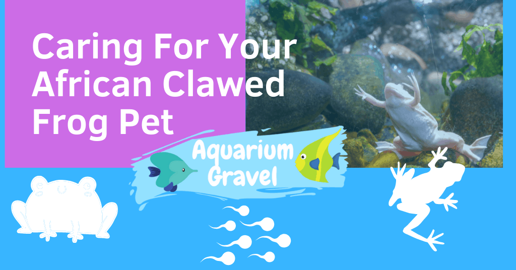 Caring For Your African Clawed Frog Pet