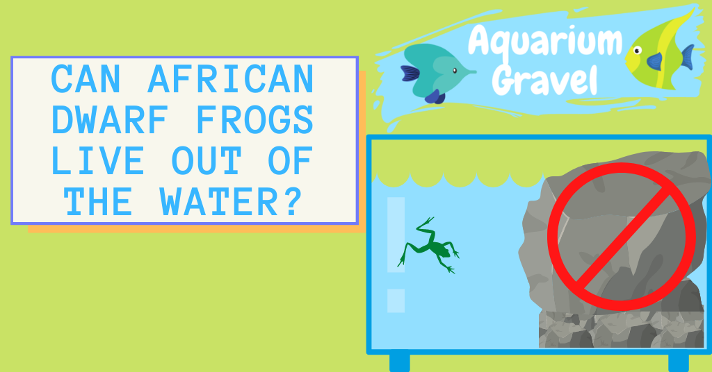 Can African Dwarf Frogs Live out of The Water?