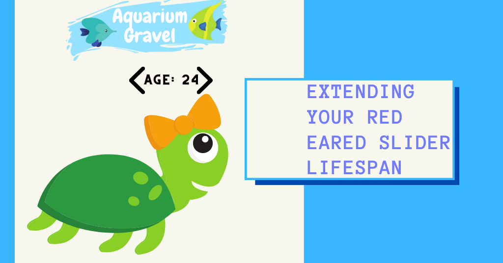 Extending your red eared slider lifespan