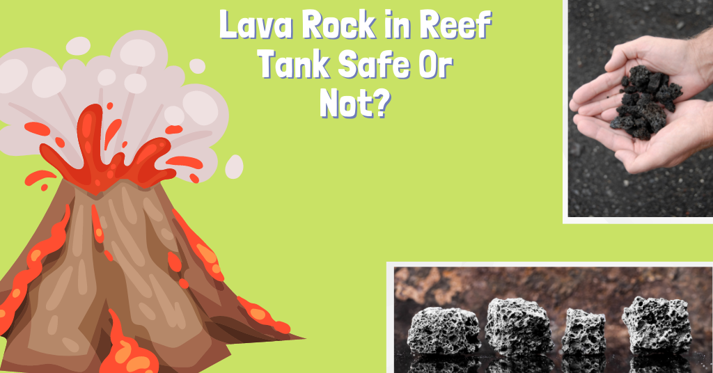 Lava Rock in Reef Tank Safe Or Not
