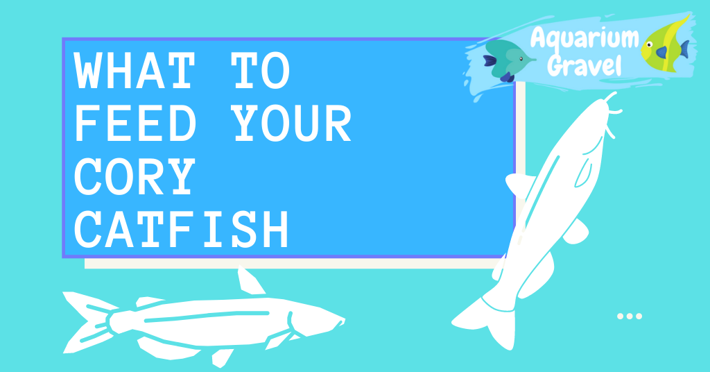 What to feed your cory catfish