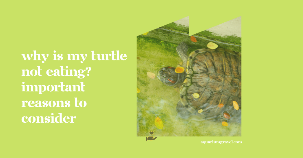 Why Is My Turtle Not Eating? Important Reasons to Consider