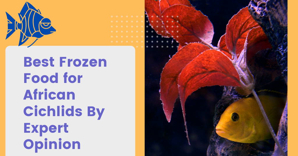 Best Frozen Food for African Cichlids By Expert Opinion
