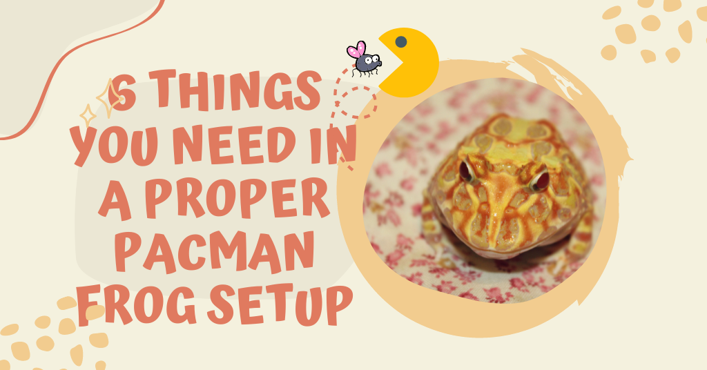 6 Things You Need In A Proper Pacman Frog Setup