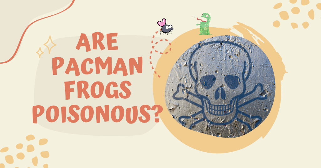 Are Pacman Frogs Poisonous