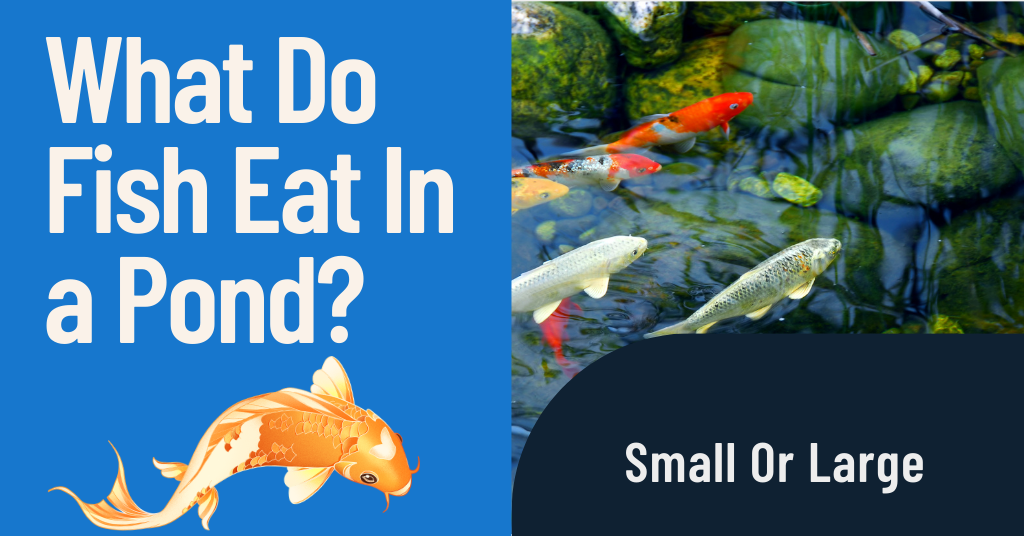 What Do Fish Eat In a Pond