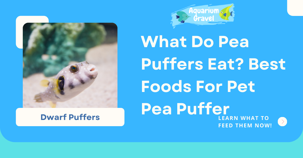 What Do Pea Puffers Eat