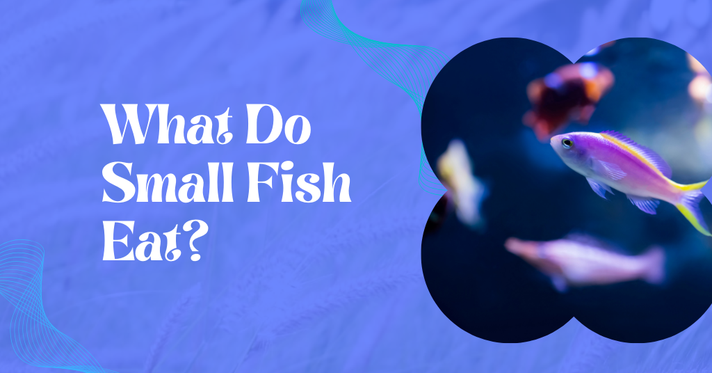 What Do Small Fish Eat